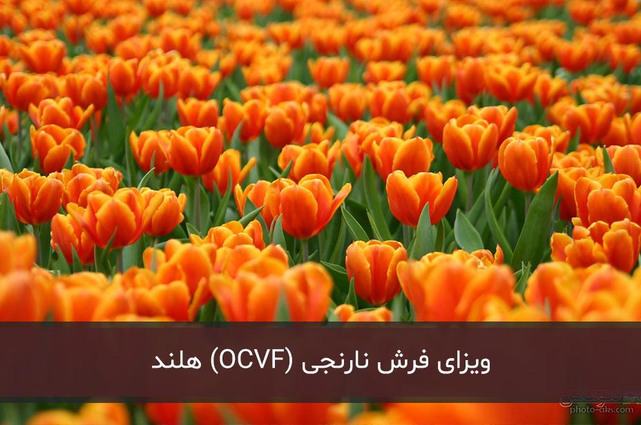 ویزای فرش نارنجی (OCVF) هلند